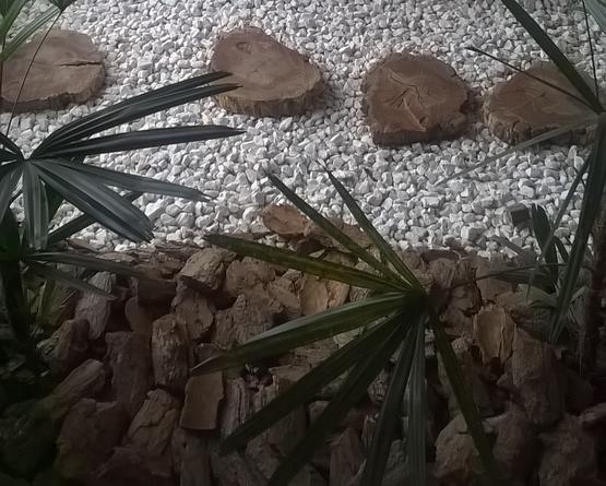 Casca de Pinus